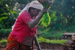 Small and Medium Enterprises in the Agriculture Value Chains, Oxfam