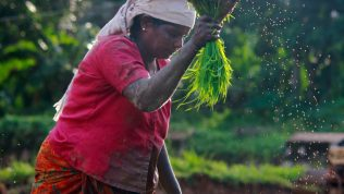 Small and Medium Enterprises in the Agriculture Value Chains