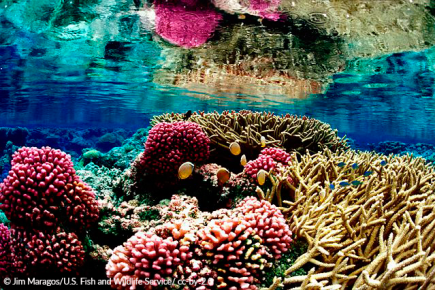 Sustaining our Oceans: A Role for Investors in Achieving SDG 14