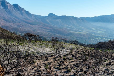 Fire and Water : 'Fynbos' Resilience