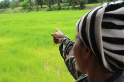 Siam Organic: Grains of Impact